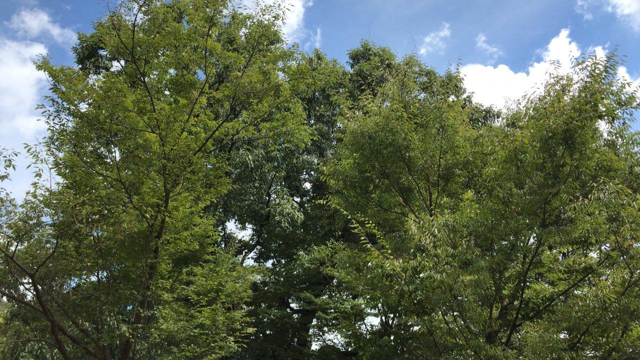ベンチから。木々と青空と白い雲。何とも言えない気持ちよさで写真では魅力が伝えきれない